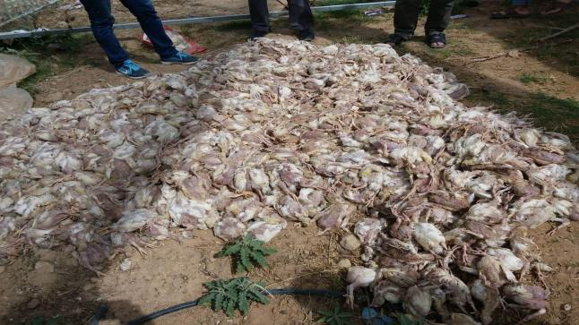 الزراعة اضرار كبيرة بعد موجه الحر علي فلسطين