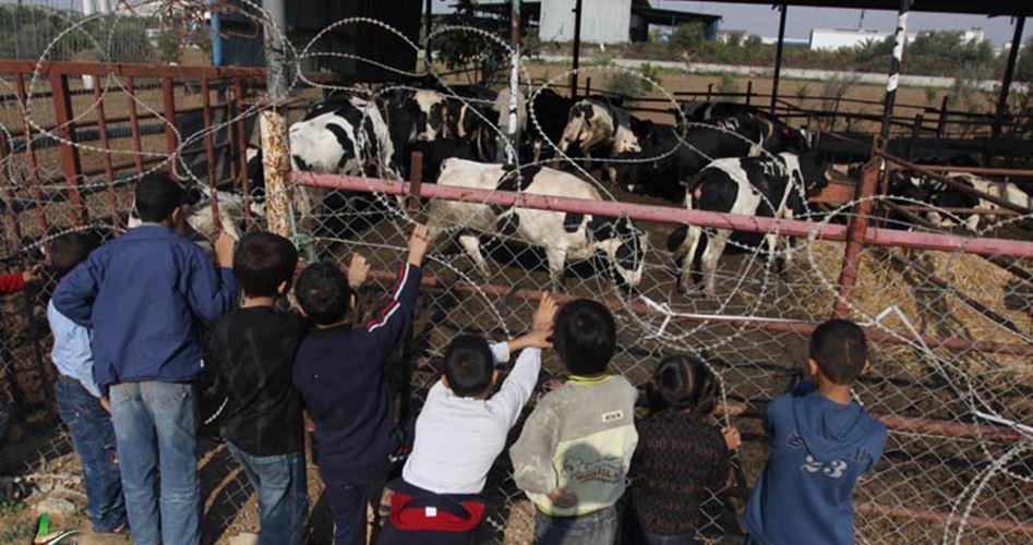 الأونروا توزع لحوم الأضاحي على أسرة في غزة